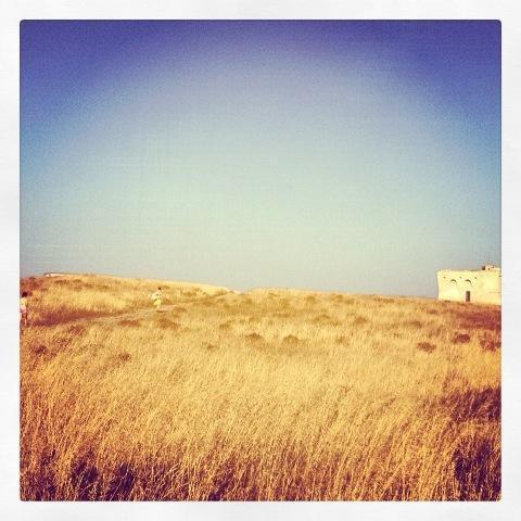 #MyPugliaExperience Torre Guaceto su #pinterest con @teresa_coppola e #lisetta11