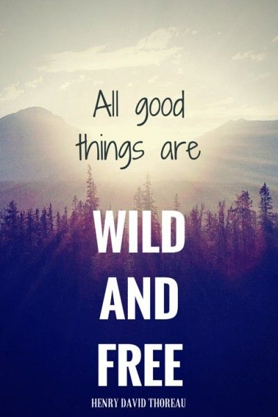 All good things are wild and free. Henry David Thoreau