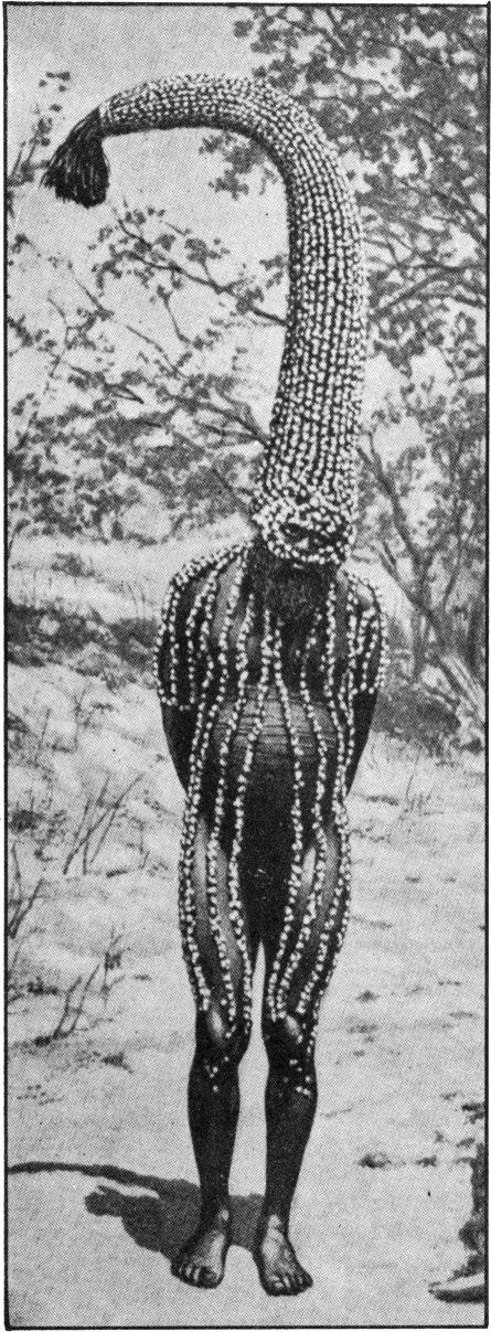 EMU MAN PERFORMS THE TOTEM  		    MAGIC FOR EDIBLE BULBS  With a head-dress representing the sacred totem of his group, this man is working magic that is to make emus abundant for the hunters of his tribe