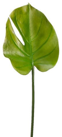 https://www.houzz.com/photos/16669976/Silk-Plants-Direct-Split-Philodendron-Leaf-Pack-of-12-traditional-artificial-flowers-plants-and-trees