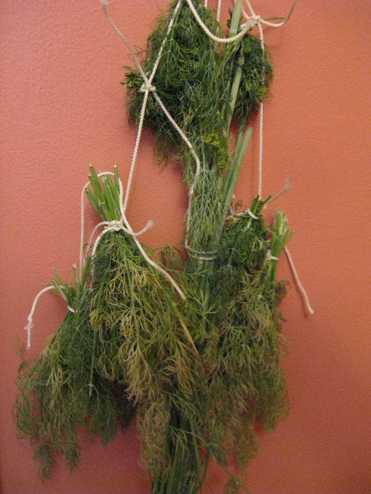 More of the dill I'm drying. Smells good in the craft room!