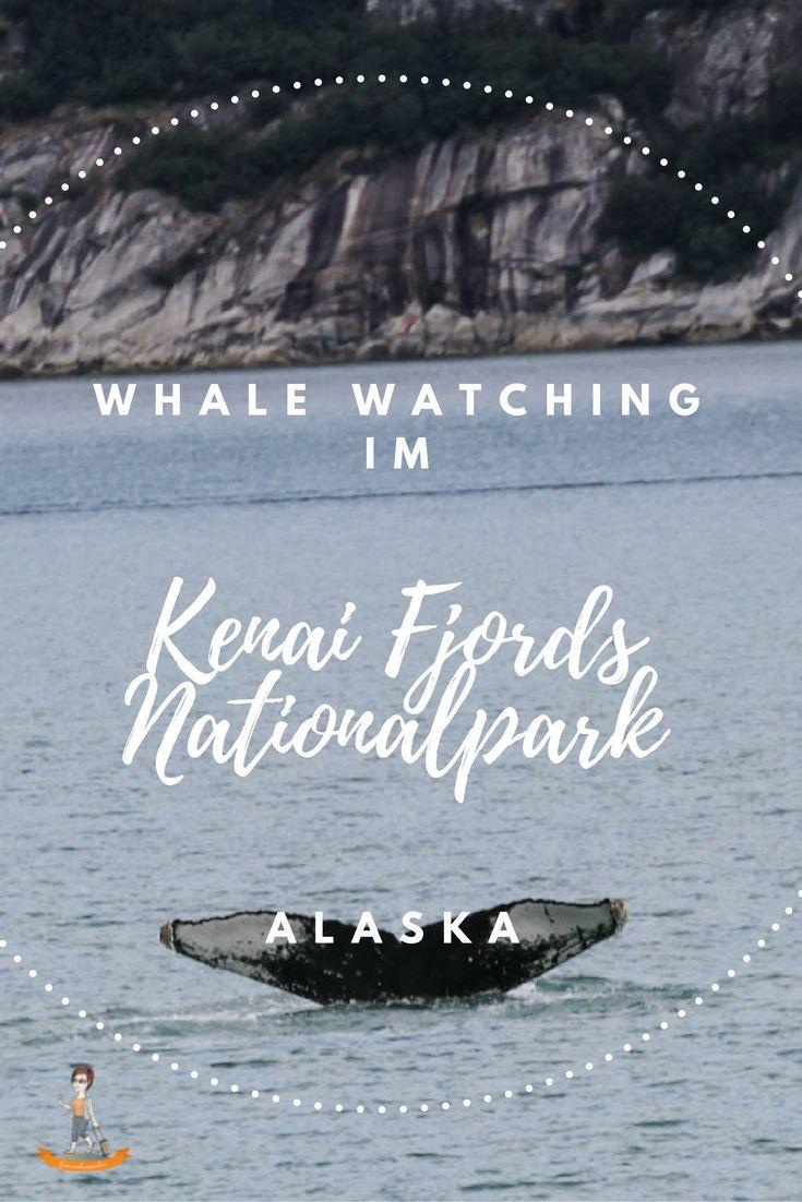 Whale Watching im Kenai Fjords Nationalpark - #Alaska   http://www.genussbummler.de