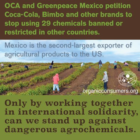 The Organic Consumers Association Mexico (OCA Mexico) has teamed up with Greenpeace to expose the environmental and health hazards of 29 toxic agrochemicals. All of these toxic chemicals are banned or restricted in other countries, including the US. #BanGlyphosate #MonsantoMakesUsSick #Health #Ag #Food #Mexico #Greenpeace