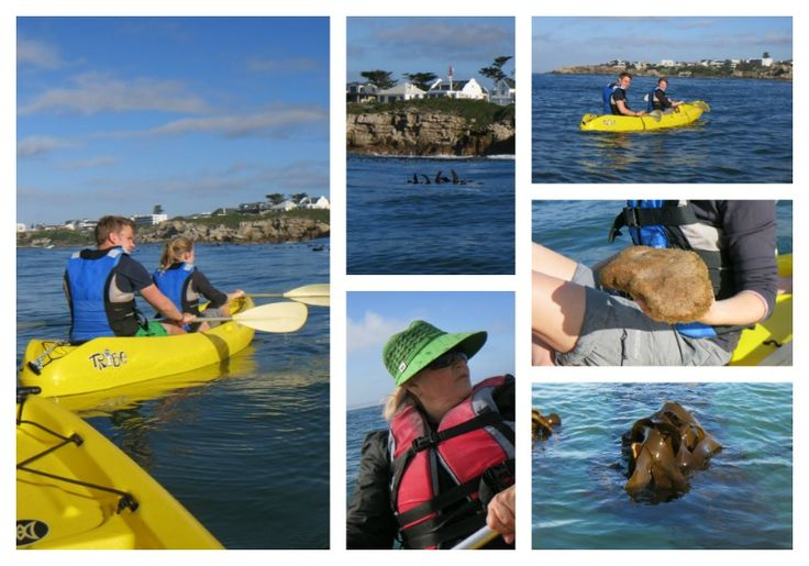 Walker Bay Adventures - Sea Kayaking Address: Old Harbour next to museum Tel: 082 739 0159 Email: wbadventures@hermanus.co.za