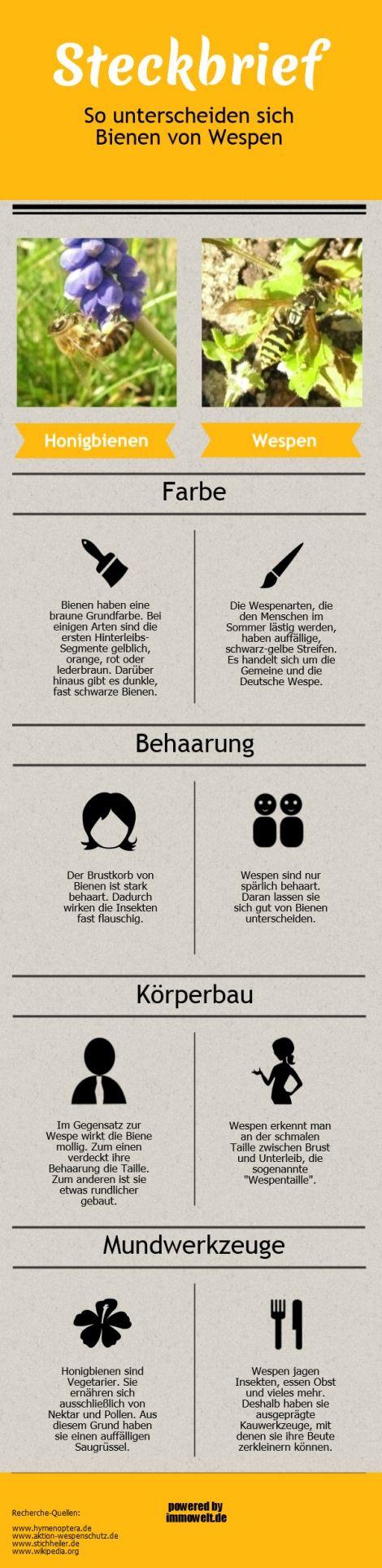 Ungewöhnlich Biene Anatomie Poster Zeitgenössisch - Menschliche ...