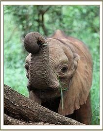 i looove elephants!