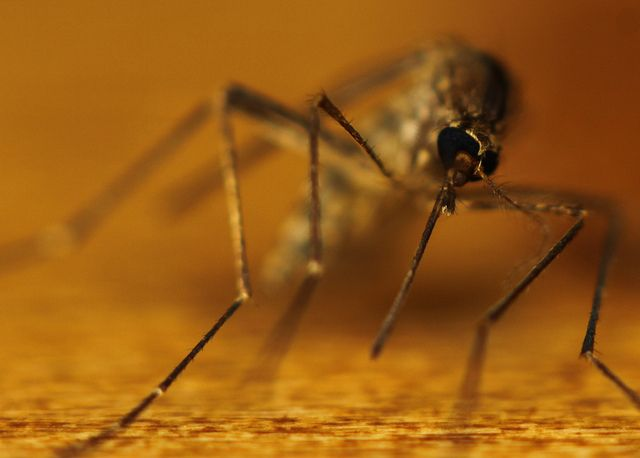 Mosquitoes have been buzzing their way into the news as of late. With the warmer summer weather upon us, it's not unusual to see these winged creatures flying around outside; but the presence of West Nile being more prevalent in the West has seen mosquitoes become more and more publicized. http://chiropractorgreensboro-thejoint.com/blog/stay-healthy-get-the-low-down-on-mosquito-bites/?utm_source=Pinterest.com