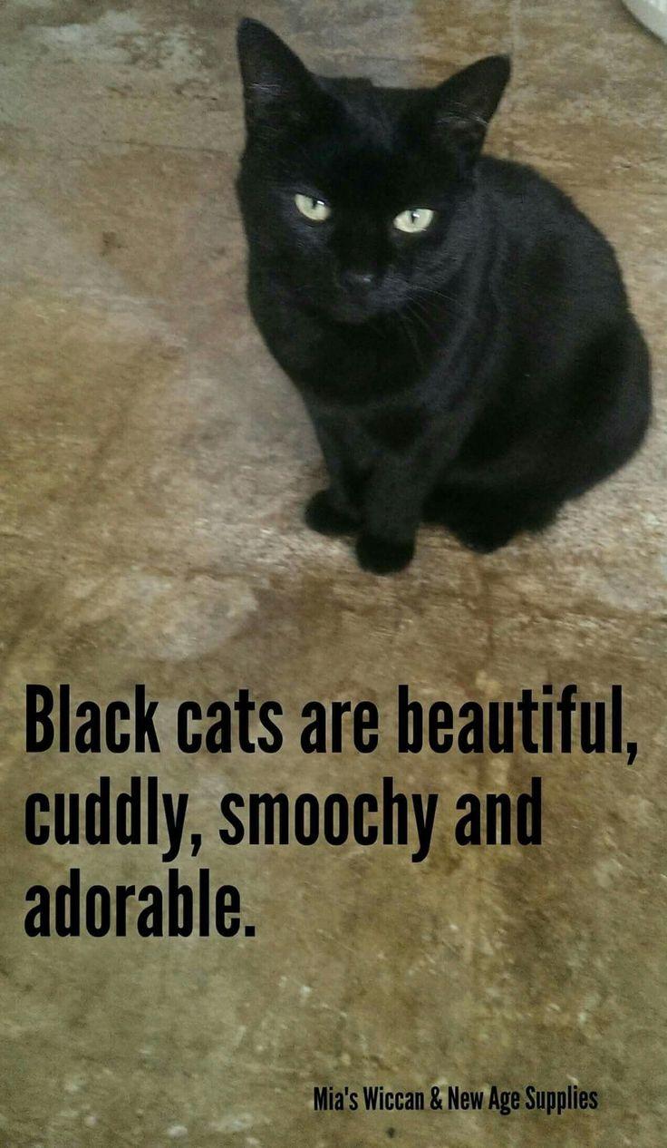 Pin By Andryea Nicslye On Black Cats Black Cat Cats Black Cats Rock