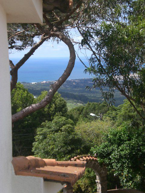 Colina Flora Eco Friendly Guest House, Portugal. We provide delicious organic breakfasts, afternoon tea and vegetarian dinners on request