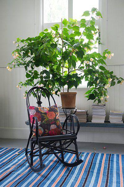 Den här krukväxten påminner om Everts stora fina Blomsterlönn/malva som stod i verandan. Han fick i unga år ett skott av sin farmor som han sedan vårdade som ett stort träd i över 70 år.