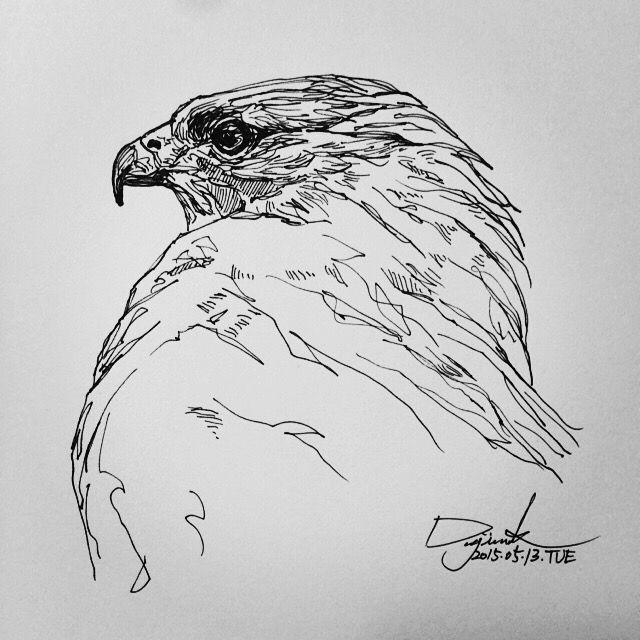 [펜화] hawk / 스케치,그림,드로잉,일러스트,낙서,sketch,penart : 네이버 블로그