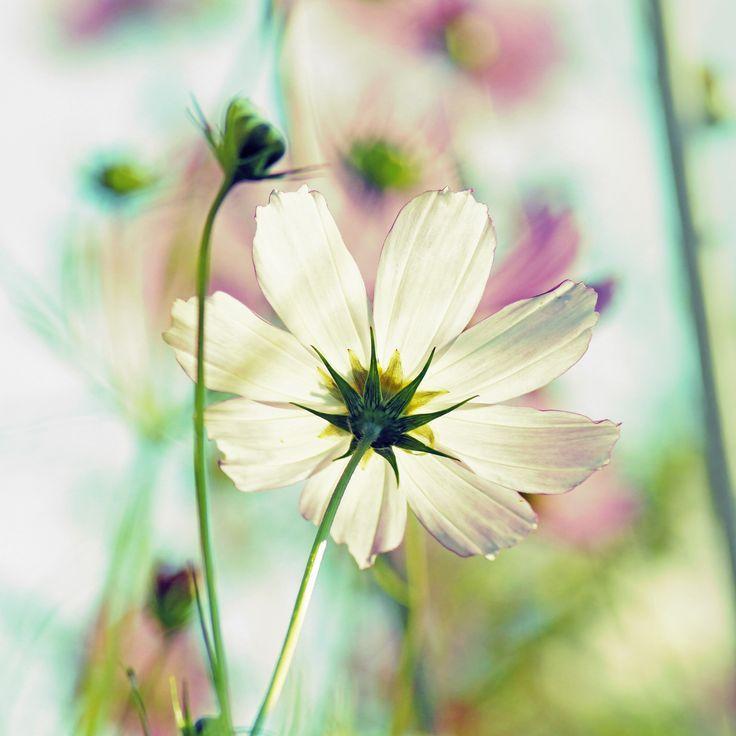 Photo White flower by Constantin Gladkov on 500px