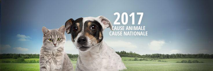 Fondation 30 millions d'amis. Association pour la défense et la protection des animaux en France. La Fondation 30 Millions d'Amis lutte constamment contre toutes les formes de souffrance animale en France et à l'étranger.