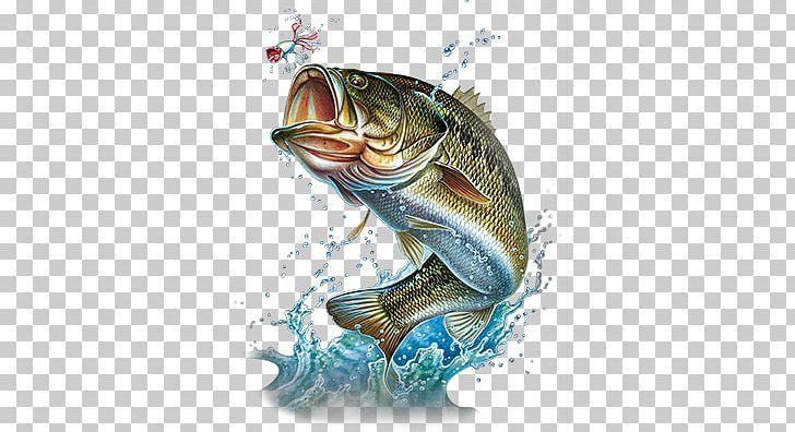 Largemouth Bass Bass Fishing Png Bass Bass Fishing Drawing Fauna Fish Largemouth Bass Bass Fishing Fish Wallpaper