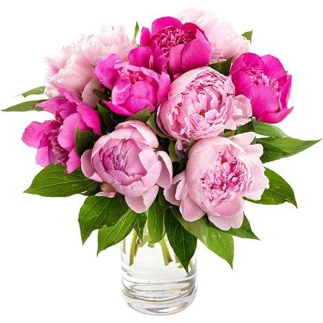 Mooie pioenrozen / nice peonies #flowers #bloemen #peonies #pioenrozen
