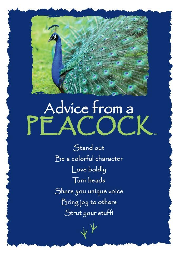 Advice From A Peacock Greeting Card Blank Your True Nature