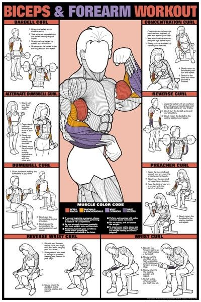 exercises to target specific muscle groups: abs, legs, tri's, back, bi's, shoulder, & chest!