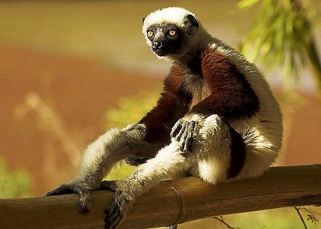 #Relax #scimmie #somiglianze #uomo #animali #natura #comportamenti