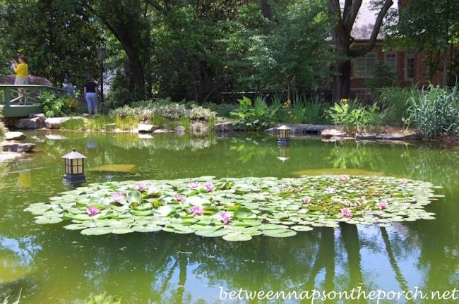 Arthur Blank's Garden on the Atlanta Botanical Gardens, Gardens for Connoisseurs Tour