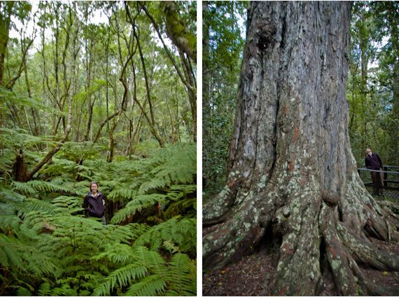 Forests of South Africa /// Half a World Away from Stumptown: Visiting the Knysna Forest - twoOregonians