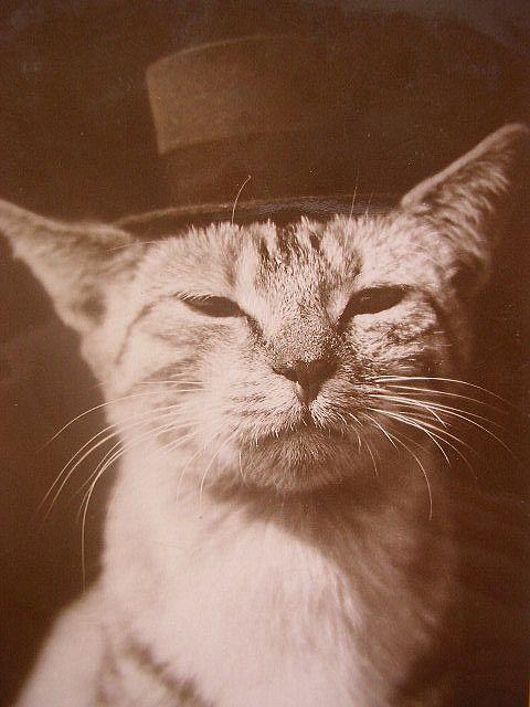 aristo-cat (couldn't resist): Vintage Postcards, Art Crafts, Vintage Wardrobe, Dogs Names, Crazy Cat, Vintage Cat, Winter Hats, Tops Hats, Baby Cat