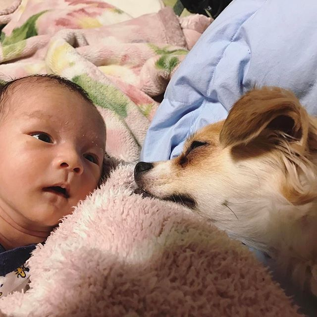 #2月17日 #生後19日 . 佑真&ここあ . うわっなんか大きいのいる! って感じの顔かな?笑 . . #0217 #baby #cute #love #snoopy #followme #新生児 #0ヶ月 #男の子 #可愛い #大好き #里帰り中 #愛犬 #ママリ #ベビフル #コドモノ #ママchan #ベビリトル #新米ママ #日韓ハーフ #日韓夫婦  #애기 #신생아 #귀여워 #아들맘 #한일베이비 #한일부부 #베비스타그램