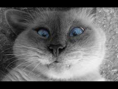 Gatos Chistosos y Divertidos 60 Minutos!! 2015 [HD]. Vídeos para morirse de la risa - YouTube
