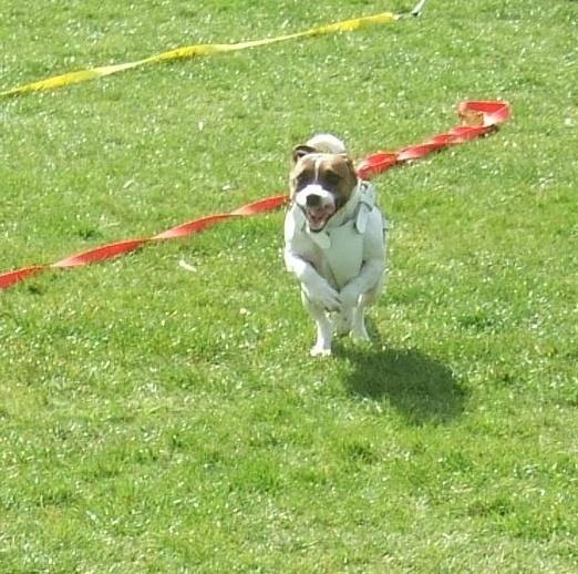 Dottie running