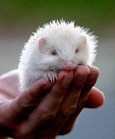 hedgehogs are fun