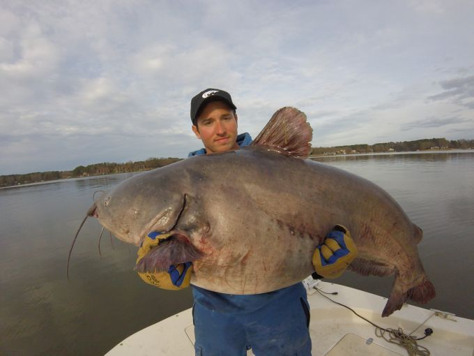 North carolina angler catches back to back giant state for State record fish