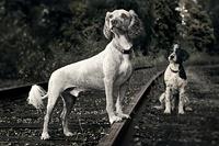 Vesa and animal photos, magic!
