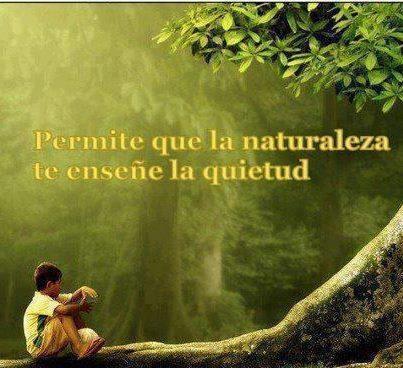 permite que la naturaleza te enseñe la quietud