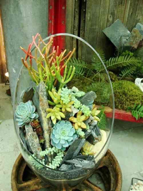 Plantes succulentes - idées darrangement -  Pinterest  Vase