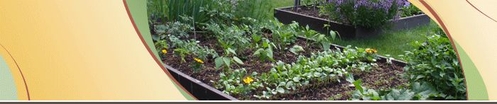 Urban Agriculture Business Information Bundle, from the Ontario Ministry of Agriculture, Food and Rural Affairs.  Includes resources for interested growers and municipal policy-makers alike on topics such as finding space, soil quality, production practices (include organic techniques), marketing products, and relevant legislation and regulations.