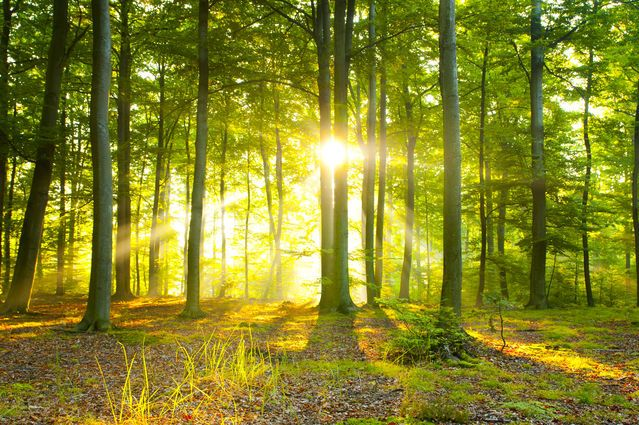A Mindful Day  ||  Three reflections for peace and well-being https://www.psychologytoday.com/blog/boundless/201712/mindful-day?utm_campaign=crowdfire&utm_content=crowdfire&utm_medium=social&utm_source=pinterest