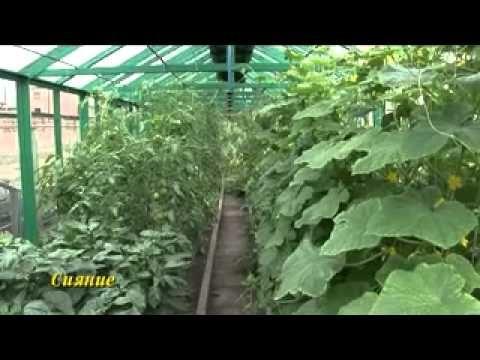 Выращивание томатов видео обучение - YouTube