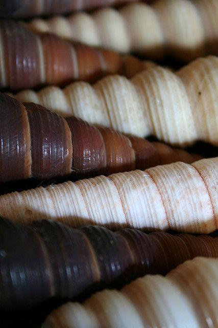 sea shells … such grand colors!