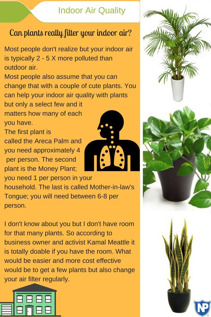 17 best ideas about indoor air quality on pinterest air for Air filtering plants