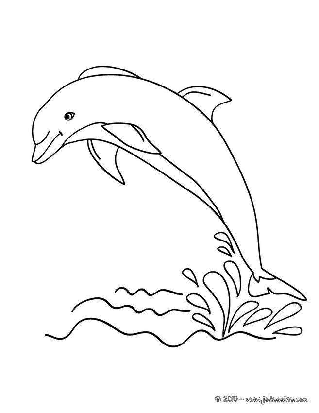 Coloriage d'un DAUPHIN hors de l'eau