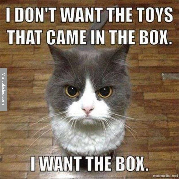 Great Funny Cat Pictures Meme