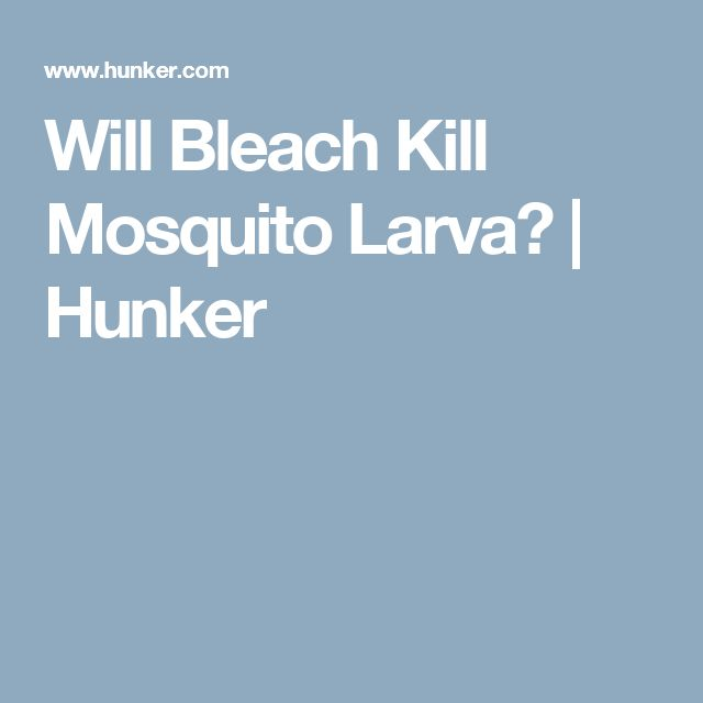 Will Bleach Kill Mosquito Larva? | Hunker
