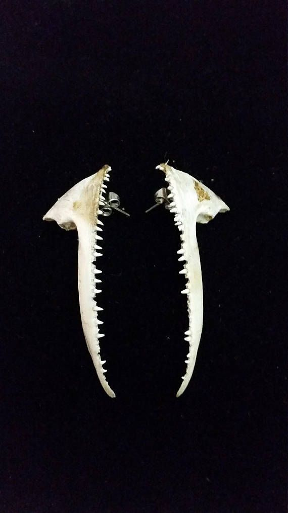 Fish Jaw Bone Earrings  handcrafted one of a kind unique