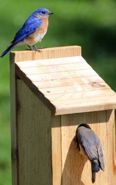 Bird house plans for different species. This one is for bluebirds. More