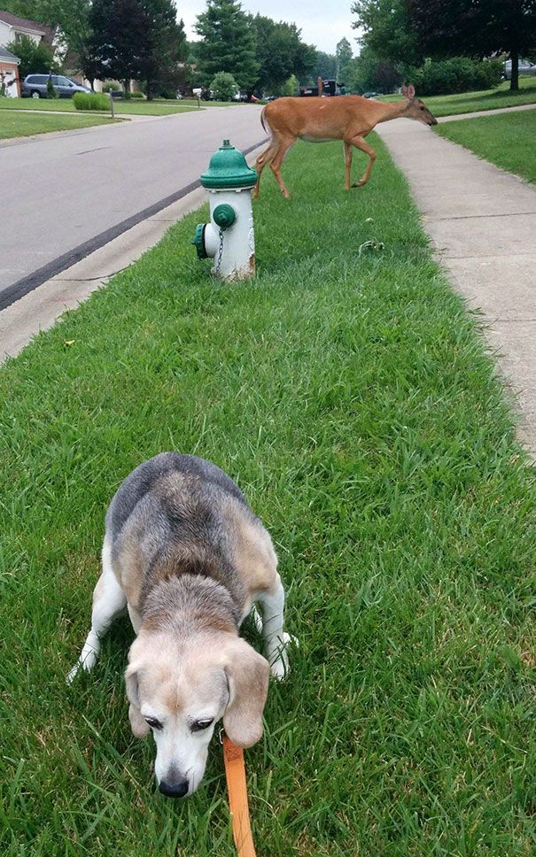 10 Dog Fails Thatll Make You Feel Guilty For Laughing