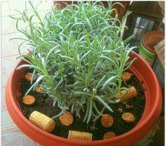 tappi di sughero come concime per rosmarino e piante aromatiche
