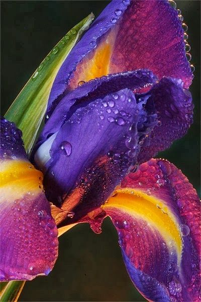 Multi-Color Iris