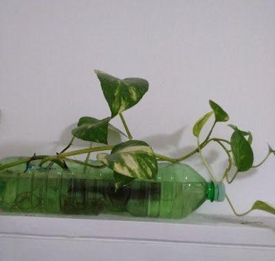 donneinpink magazine: Come far crescere le piante in una bottiglia di plastica senza terriccio