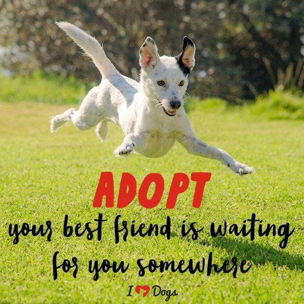 Are You Somebody S Hero Training Your Dog Dog Training Dog Lovers