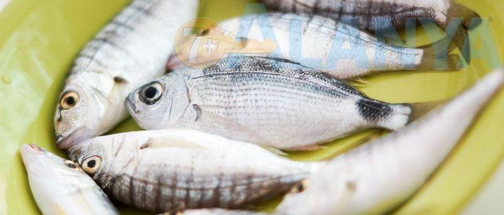 Есть ли в Аланье селёдка? Какая рыба продаётся в Турции? Сколько стоит свежая рыба в Аланье? Что попадается на крючок любителя-рыболова в Аланье? #Турция #Аланья #информация #новости #рыба #цены #фото #Turkey #Alanya