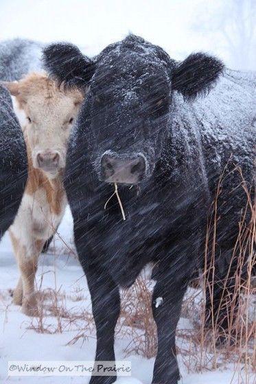 Best 25 Cattle Trough Ideas On Pinterest Cattle Water